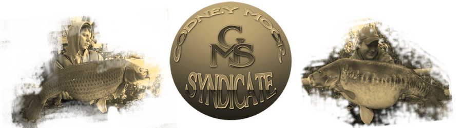 Godney Moor Syndicate Forum